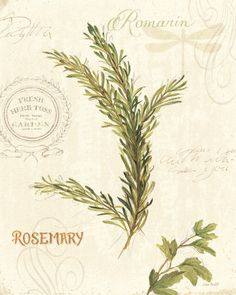 Herbal remedies from evergreen trees and shrubs from around the world.