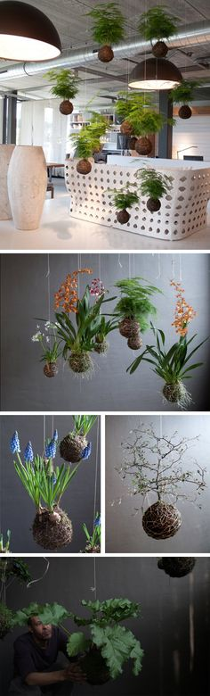 48 Ideas For Plants Indoor Hanging String Garden