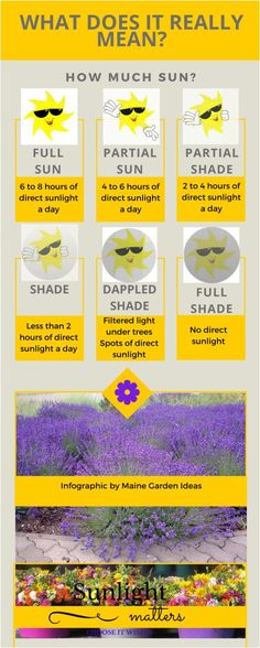 How much sun for plants? Full sun, shade,  etc