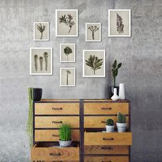 Small Fynbos Gallery wall - 8 prints, various sizes (Monochrome) Botanical Decor, Botanical Prints, Van Niekerk, Custom Wallpaper, Cushion Covers, Pretty Pictures, Fine Art Photography, Decorating Your Home, Gallery Wall