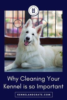 Tips for cleaning your Dog's Kennel. A dirty kennels must be cleaned for health and safety. But more than just an unpleasant smell, an unclean kennel is very harmful for the pets that stay in it. Brain Training, Dog Training, Dog Furniture, Dog Crate, Health And Safety, Dog Mom, Crates, Your Pet, Cat Lovers