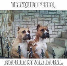 Tranquilo perro. #humor #risa #graciosas #chistosas #divertidas