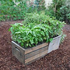 Edible gardening on pinterest edible garden sunsets and - Planters for small spaces ...