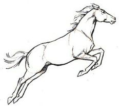 Horse jumping sketch