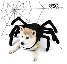 PAWZ Road Dog Spider Costume Halloween Pet Costumes with Furry Spider Legs from Small to Large Size – Medium – Best Pet Supplies Online – Find The Best Pet Supplies Spider Halloween Costume, Handmade Halloween Costumes, Dog Halloween, Pet Costumes, Homemade Halloween, Halloween Decorations, Spider Dog, Spider Webs, Dog Lion Mane