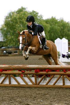Peanut~ stallion~hunter pony~ has no mate Hunter Horse, Jumping Horses, Ponies For Sale, Welsh Pony, Cute Ponies, Pony Horse, Hunter Jumper, Horse Photography, Horse Love