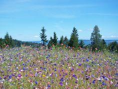 wildflower meadow - Google