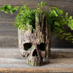 Groot Planter Skull is traditionally hand sculpted by lead artist Andrew Firth at Jack of the Dust in Australia comes with free express shipping worldwide. Real Human Skull, Styrofoam Art, Indoor Waterfall, Skull Painting, Aquarium Decorations, Skull Art, Body Art Tattoos, Garden Art, Halloween