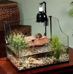 Exo Terra Bent Glass Turtle Terrarium: Reptile Habitats
