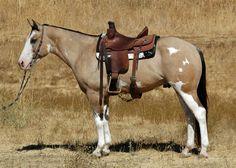 Buckskin overo paint horse