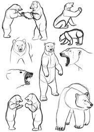 how to draw polar bears