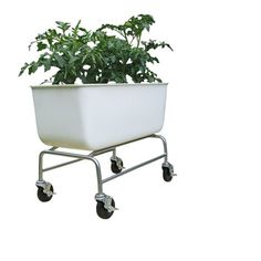 The Food Map Container may look like a bathtub but is the ideal planter.