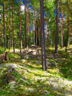 Finland ❤️ Santa Claus Village, Lake Beach, Mists, Norway, Coastal, Beautiful Places, National Parks, Scenery, Hiking