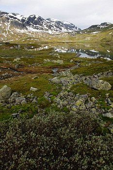 Hardangervidda Telemark Norge
