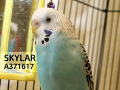 Adopted! Sklyar has found her forever home. 5/23/15