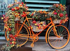 This bicycle would definitely stand out with its charming Fall flair! This bicycle would definitely stand out with its charming Fall flair! Old Bicycle, Bicycle Art, Bike Planter, Arte Floral, Yard Art, Garden Inspiration, Container Gardening, Flower Pots, Outdoor Gardens