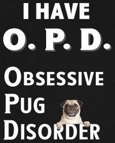 Visit our website for more information on Pugs. It is a great area to read more. Pug Pictures, Funny Animal Pictures, Bulldogs, Pug Quotes, Pug Mug, Pugs And Kisses, Baby Pugs, Cute Pugs, Cutest Dogs