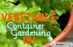 You don't have to have a lawn--or tear yours up--to have a fruit and vegetable garden. A Beginners Guide to Container Vegetable #Gardening | via @SparkPeople
