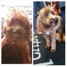 Rosey looking really cute, before & after her fun spa day!