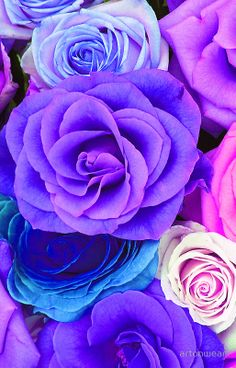 'Colorful Roses Collage-Cool Tones' iPhone Case by artonwear Beautiful Rose Flowers, Pretty Roses, Black Flowers, Amazing Flowers, Purple Flowers, Bling Wallpaper, Flower Phone Wallpaper, Purple Wallpaper, Small Wedding Bouquets