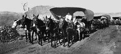 Comboio de carroças na Serra da Esperança, em Guarapuava – 1937 |