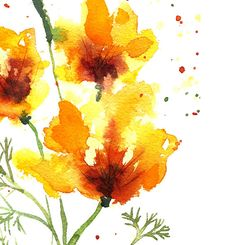 California poppy 2 Floral Watercolor painting by colorZen on Etsy