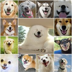 Dogs' Smiling Faces