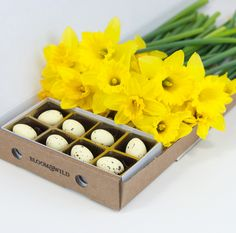 Bloom & Wild - Send Flowers The Dora - 150 daffodils with parline chocolate eggs Bloom And Wild, Send Flowers, Flower Delivery, Easter Ideas, Daffodils, Bouquet, Eggs, Chocolate, Gifts