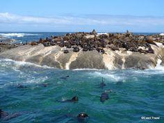 Capetown. Mergem impreuna ? Info: http://www.imperatortravel.ro/2012/08/haideti-cu-imperator-in-sudul-africii.html