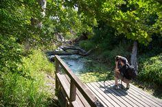 Garden Bridge, Wanderlust, Deck, Hiking, Outdoor Structures, Outdoor Decor, Trips, Types Of Fish, Jungles