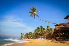 Шри Ланка, Хиккадува 29 300 р. на 8 дней с 24 ноября 2017 Отель: YKD TOURIST REST ** Подробнее: http://naekvatoremsk.ru/tours/shri-lanka-hikkaduva-41