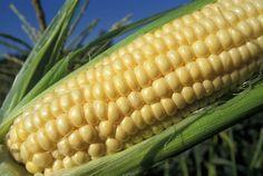 Joe Blair Recipe-Indiana Bacon Corn