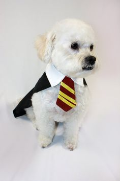 Harry Pawter dog costume: If I do get a dog, it will be wearing this costume for Halloween.