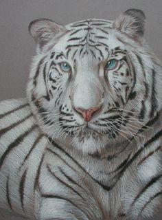 White Tiger by https://onewindcatcher.deviantart.com on @DeviantArt