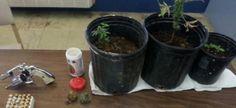 Tenían plantas de marihuana en el balcón de su casa...