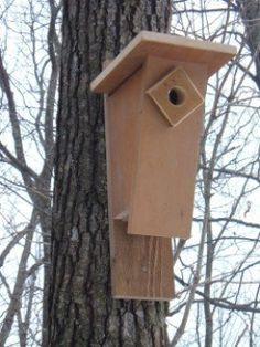 Birds Choice WCBBF Cedar Bluebird Feeder
