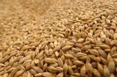 How To Store Wheat Berries