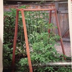 Martha Stewart Living - A Frame Tomato Stakes