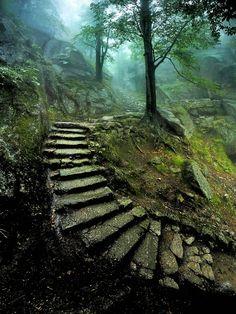 00 Karol Nienartowicz. Stairway to the Castle. 2014