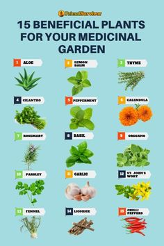 Gardening Vegetables You don't need a lot of space to grow your own medicinal garden at home. Here we show you how to grow all of these plants in area of just 54 sq ft. *Always consult with a medicial practioner before trying out any new medicines. Healing Herbs, Medicinal Plants, Herbal Plants, Gardening For Beginners, Gardening Tips, Gardening At Home, Gardening Courses, Gardening Supplies, Container Gardening