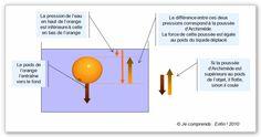 La poussée d'Archimède est créée par la différence de pression de l'eau