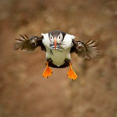 Incoming! by izzy's-photos, via Flickr