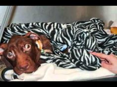 jersey montclair happy ending abused bull found