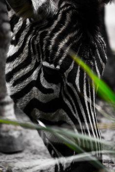 Dark Stripes by Daniel Haddad on 500px
