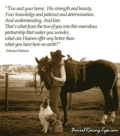 The profound life lessons I learned from a horse. Conveyed by a communication w/more clarity than anything else before and since