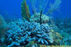 undersea scenery - Google 검색