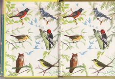 The Yellow Bird Book, Whitman Books. Endpapers to Yellow Book of Birds of America, by Frank G. Ashbrook, illustrations by Paul Moller, Whitman Publishing, Racine, WI, 1954--One of a series of four books. (The Yellow Bird Book by Calsidyrose, via Flickr)