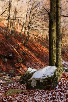Montseny Catalonia  by Portfolio @ Nature Shots