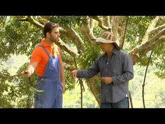 Escuela de campo: Podas en cultivo de mango - 2 de octubre