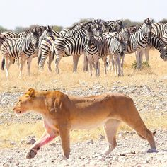 Reise nach Namibia - Genießen Sie 25 € kostenlos bei Airbnb (Link im Profil) Namibia, Link, Animals, Profile, Travel, Animais, Animales, Animaux, Animal